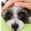 Basic Pet First Aid Course Online