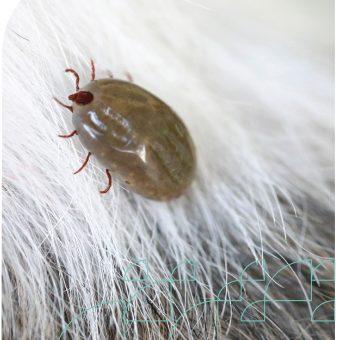 Animal Care Short Course