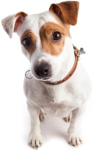 certificate iii in pet grooming